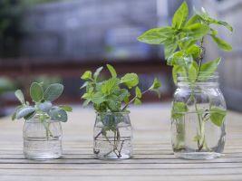 Čerstvé bylinky hezky voní a výborně chutnají