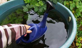 Dešťová voda je příjemnější jak pro rostliny, tak i pro vaši peněženku