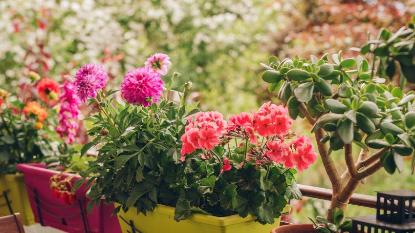 Inspirace: Zahrada na balkoně