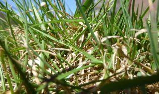 Jak pečovat o trávník v období sucha?