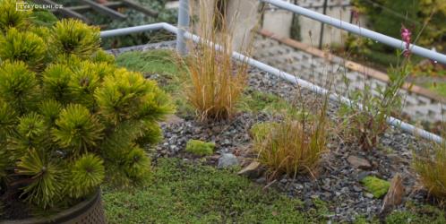 Přemkovy rychlé rady pro zahrady - 4. díl - Jak si udělat zahrádku i na balkónech a terasách?