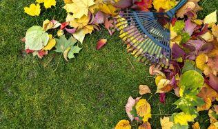 Jak využít spadané listí