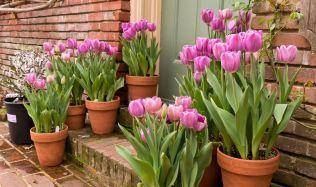 Jaro se hlásí o slovo. Nezapomeňte na květinovou výzdobu vašich oken