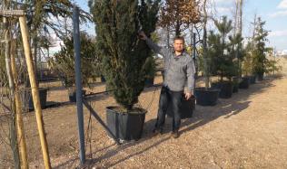 Krásné stromy do zahrady lze sázet i vzrostlé. Které vybrat? Podívejte se na Přemkovy rychlé rady pro zahrady!