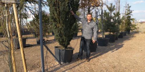 Přemkovy rychlé rady pro zahrady - 5. díl - Krásné stromy do zahrady lze sázet i vzrostlé. Které vybrat?