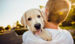 Máte psa bez čipu? Hrozí vám pokuta až 20.000 korun