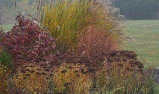 Mezi rostliny, které na naší zahradě udělají podzim podzimem, patří dozajista ozdobné traviny