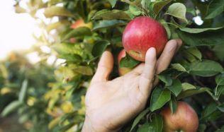 Nastala vhodná doba k prořezu některých ovocných dřevin