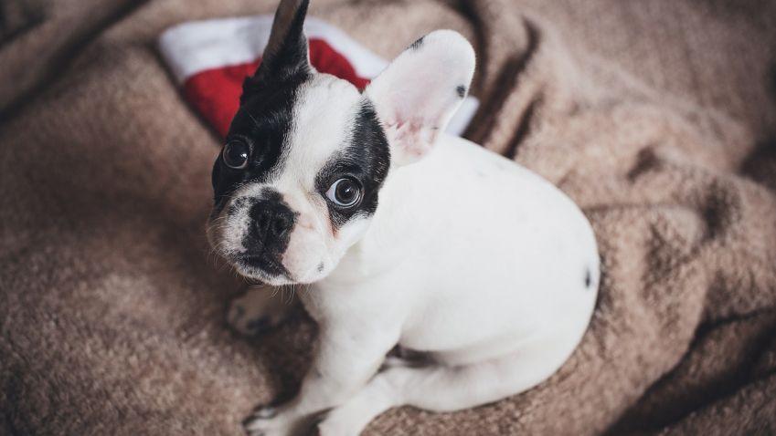 Nezapomeňte na povinný čip pro psa. Hrozí pokuta až 20 tisíc