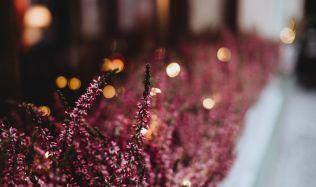 Přemkovy rychlé rady pro zahrady - Okenní parapet může být plný květů i na podzim