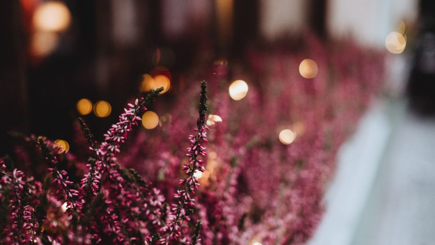Okenní parapet může být plný květů i na podzim