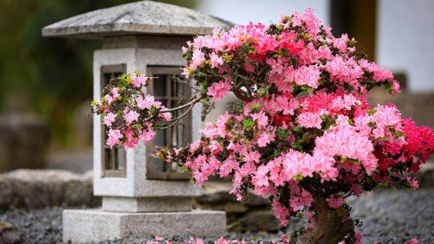Pár tipů, jak si v našich končinách vytvořit okrasnou zahradu v japonském stylu