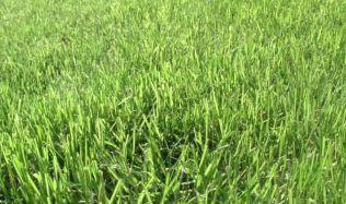 Vertikutace trávníku - je potřeba?