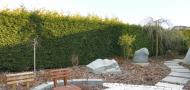 Živé ploty ano/ne? Podívejte se na Přemkovy rychlé rady pro zahrady!