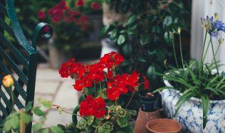 Prázdniny u konce, září za dveřmi a na zahradě pomalu ale jistě končí období hojnosti