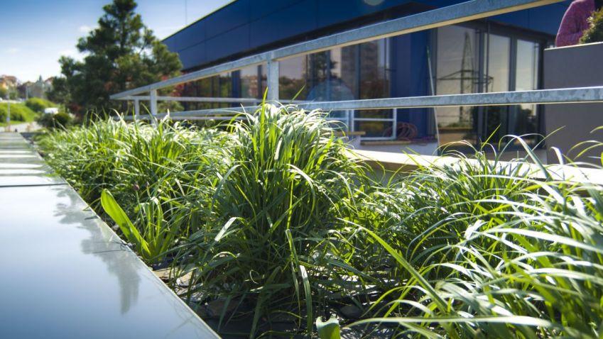 Přihlaste se do soutěže Zelená střecha roku