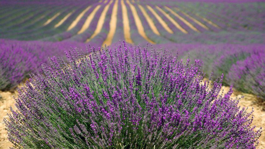 Provence u vás doma aneb vše o levanduli