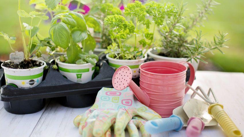 Rady a tipy, jak pěstovat bylinky na balkoně nebo doma za oknem