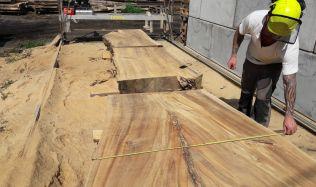 Téma: dřevo starých stromů
