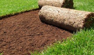 Uvažujete o rychlém ozelenění vaší zahrady? Položte si travní koberec