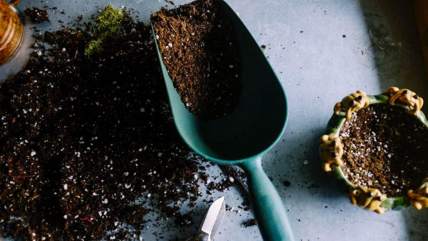 Zahrada v srpnu – co vše je potřeba udělat na zahradě před koncem prázdnin