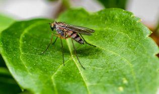 Zbavte se otravného hmyzu v domácnosti, pomáhají babské rady i designové vychytávky